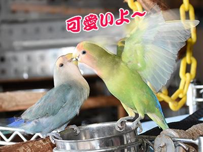 9_可愛い