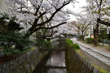 京都201904(17)