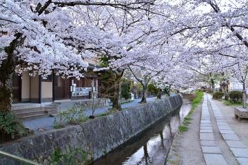 京都201904(19)