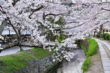 京都201904(20)
