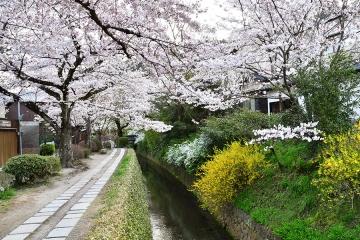 京都201904(21)