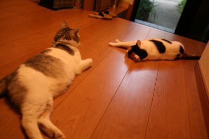 猫だって暑い