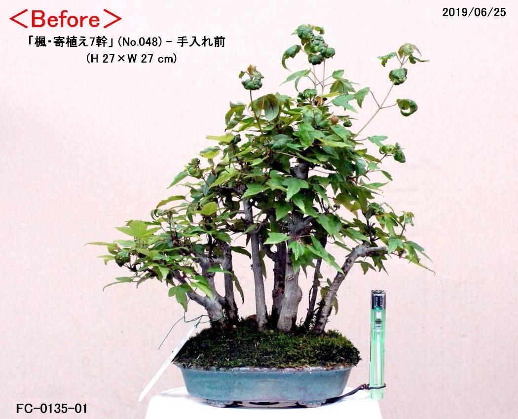 FC0135-01.jpg