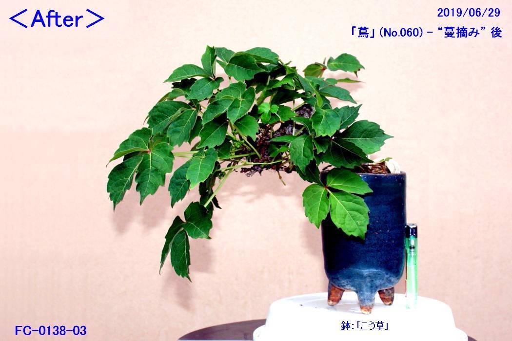 FC0138-03.jpg