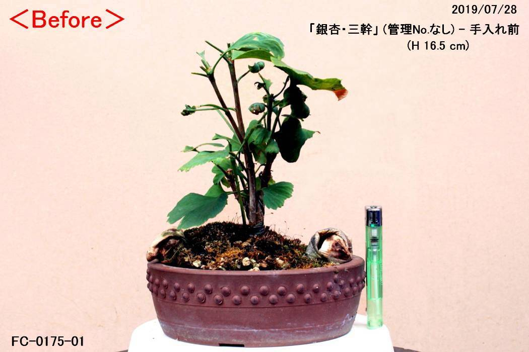 FC0175-01.jpg