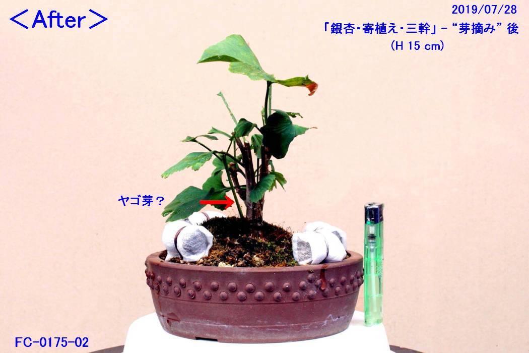 FC0175-02.jpg