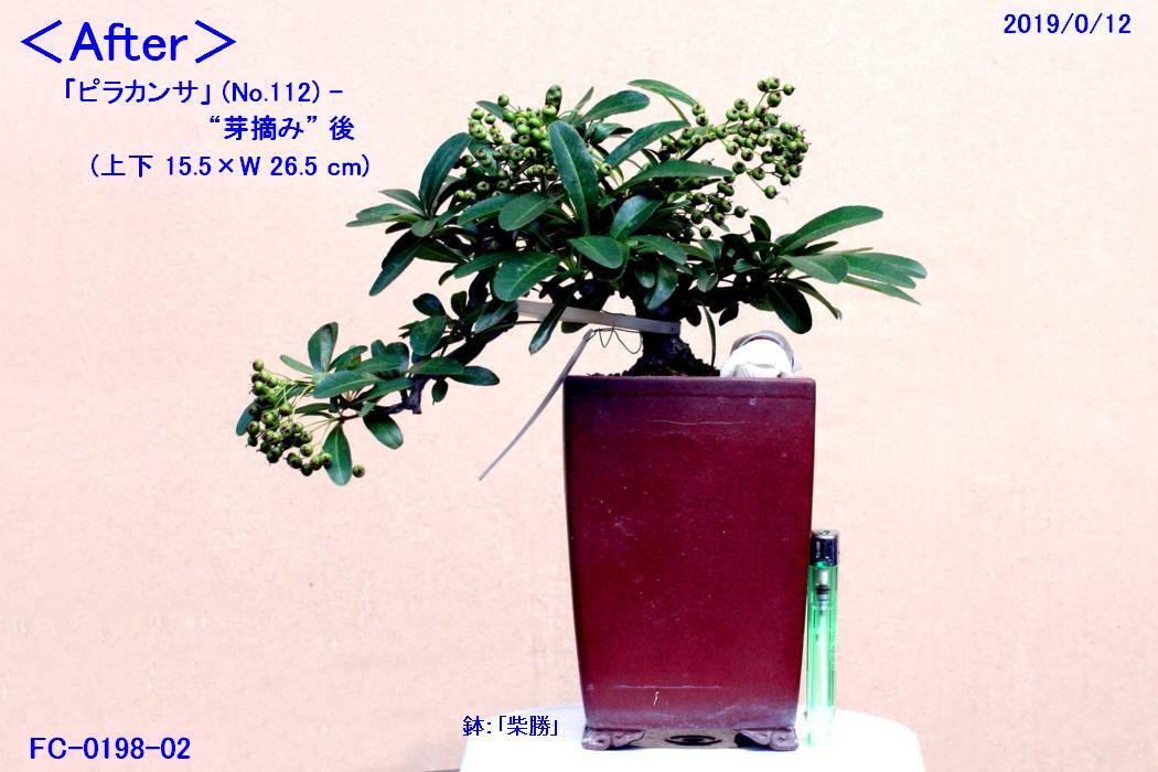 FC0198-02.jpg