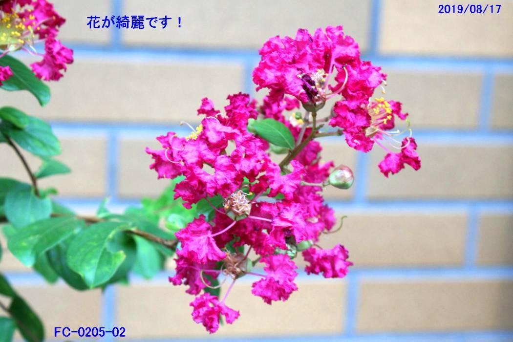 FC0205-02.jpg