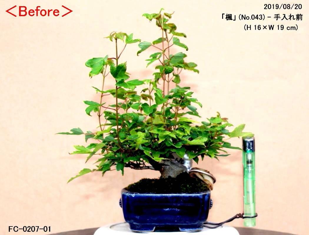 FC0207-01.jpg