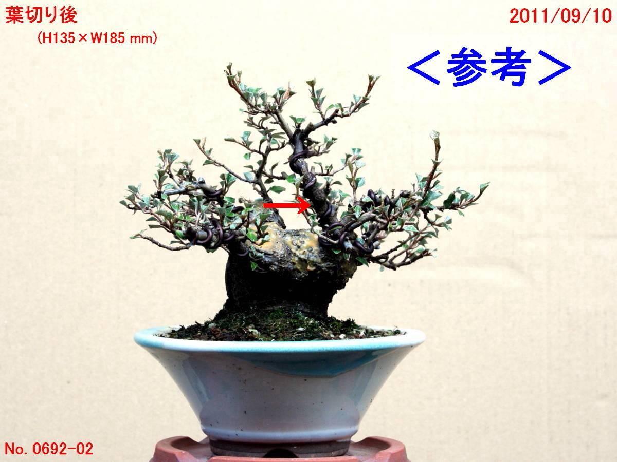 FC0209-04.jpg