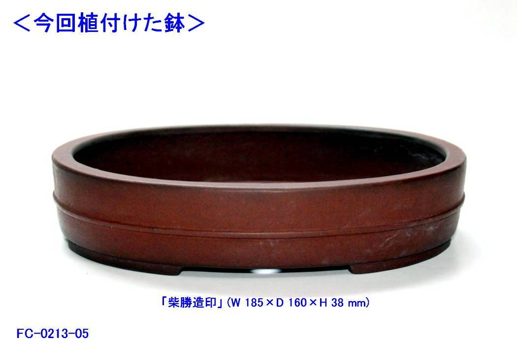 FC0213-05.jpg