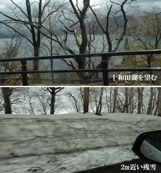 十和田湖畔より登る
