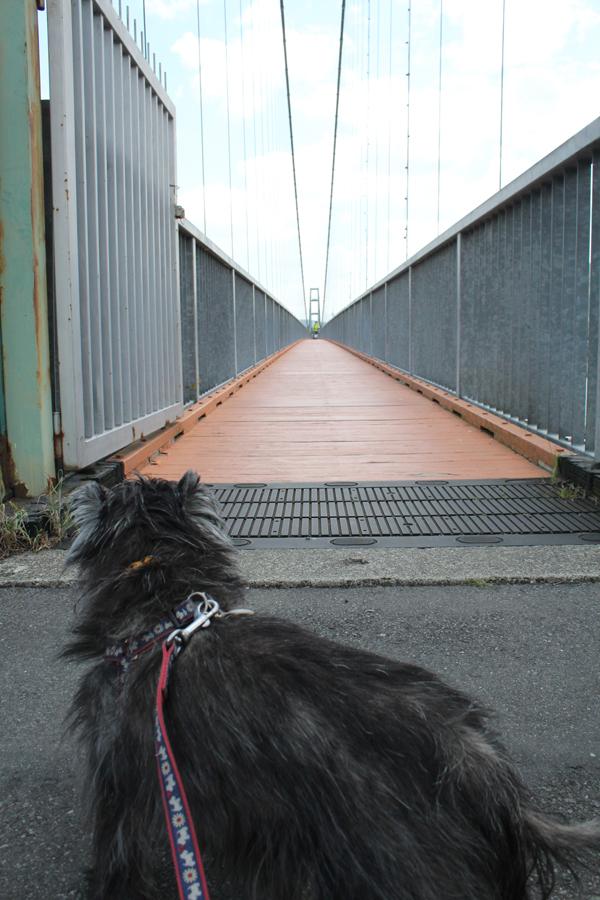 01吊り橋のコピー