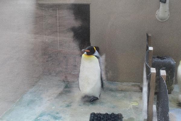 05王様ペンギンのコピー