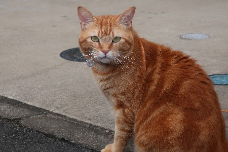長山の猫20190721-03
