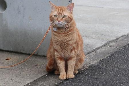 長山の猫20190721-02
