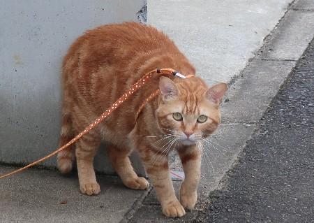 長山の猫20190721-01