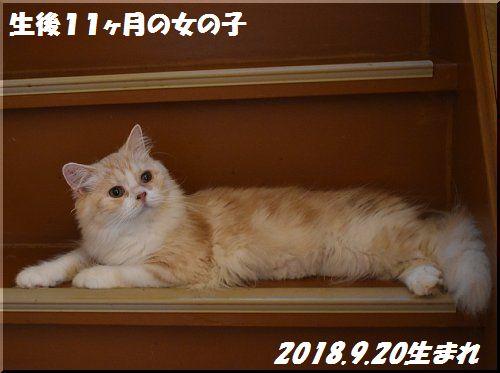 2019081701.jpg