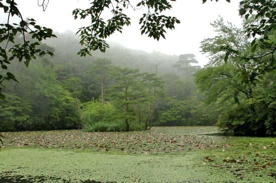 長谷池水連