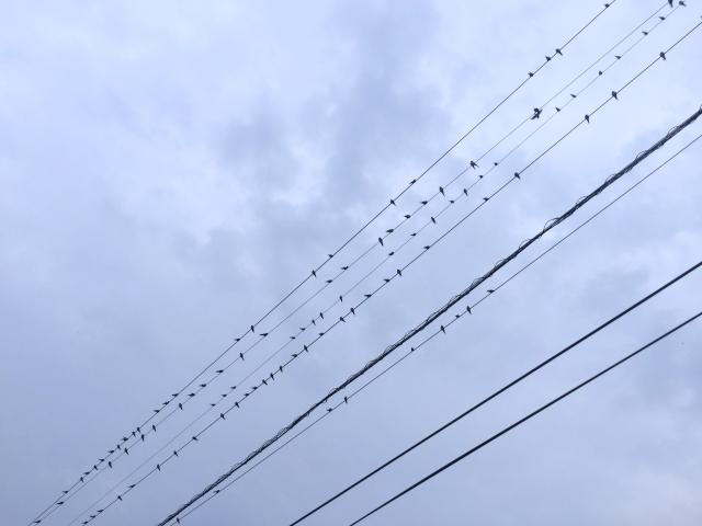 bird_7594.jpg