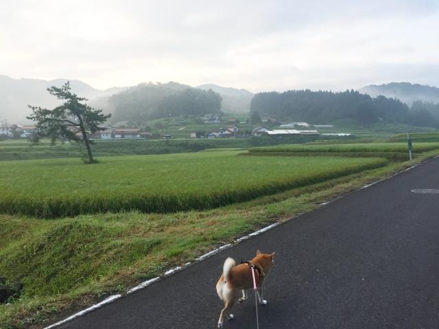 suzushi_7753.jpg