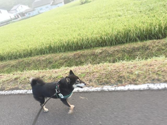 suzushi_7756.jpg
