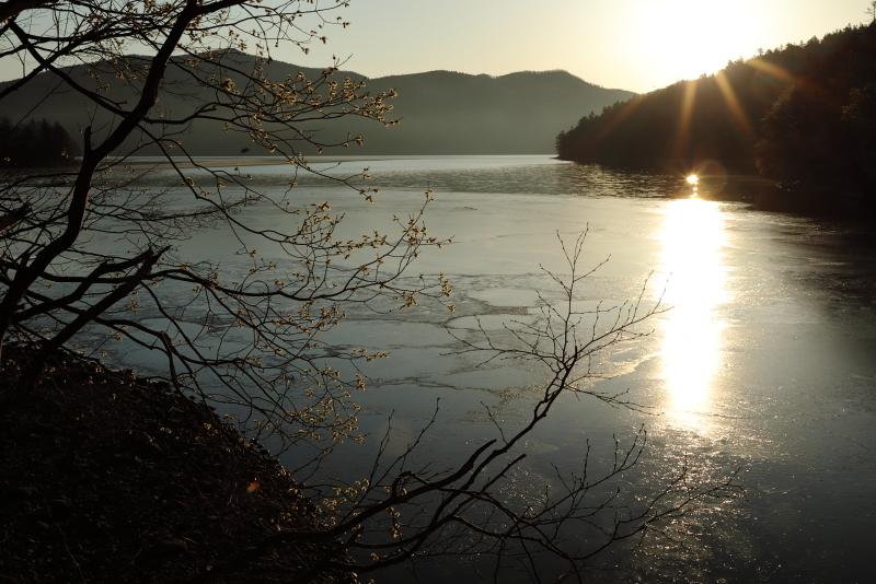 9087 猫柳と然別湖
