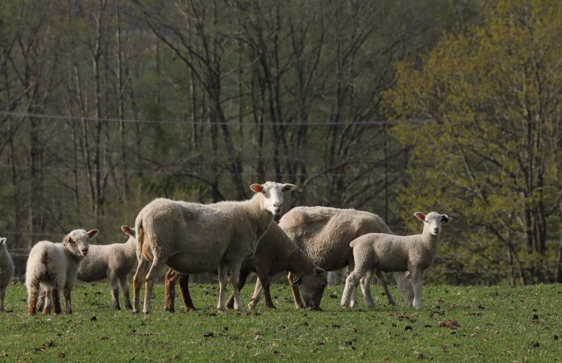 9756 羊の家族