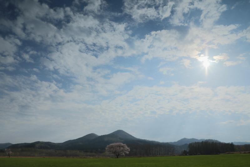 0122 一本桜