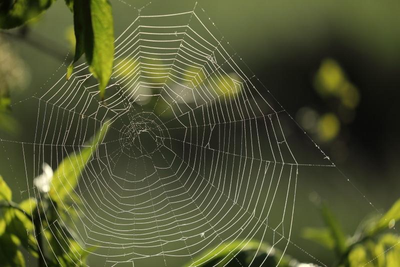 0213  蜘蛛の巣