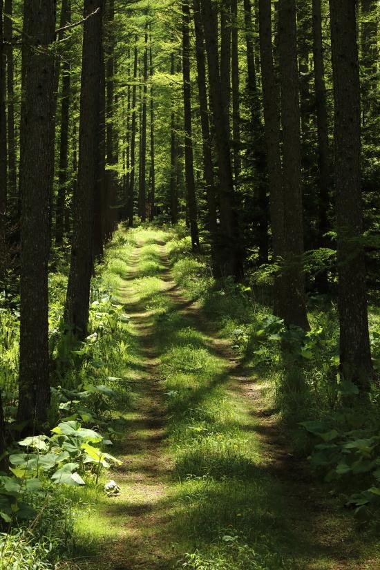 0838 森の小径
