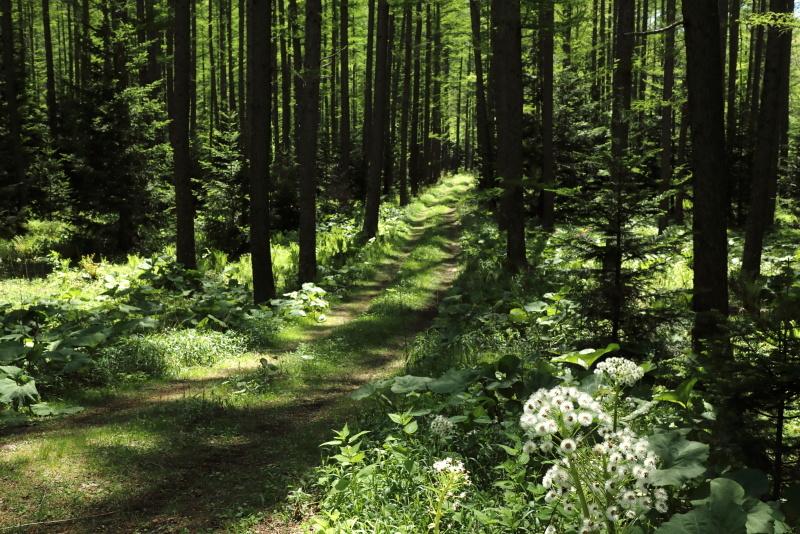 0839 森の小径