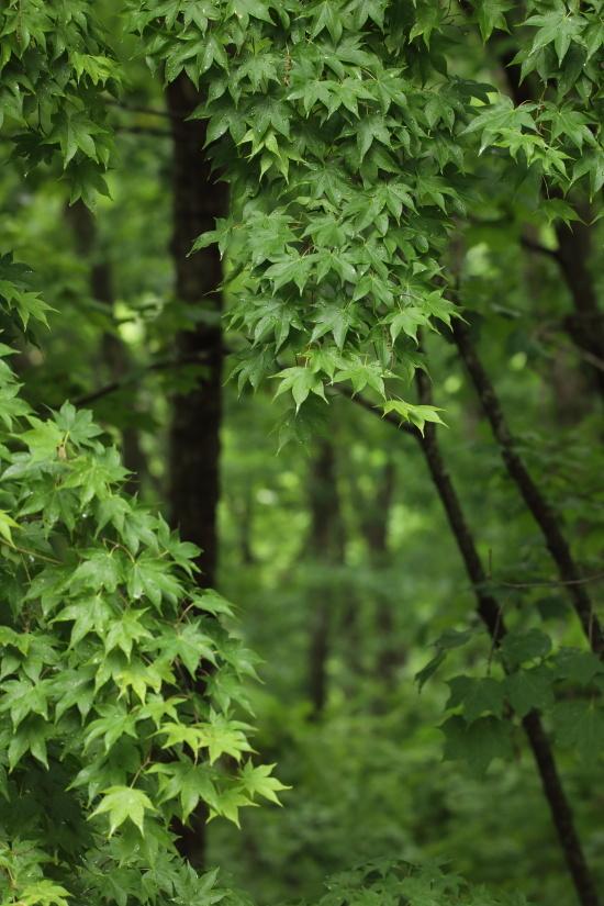 1517 深い森