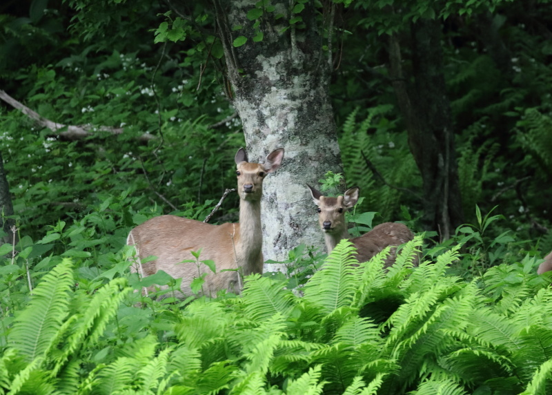 6866 鹿の親子