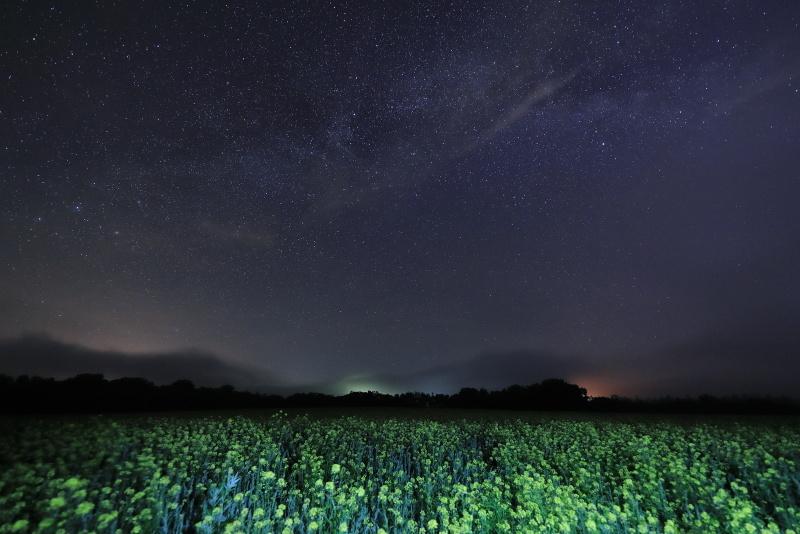 3437 菜の花と星空