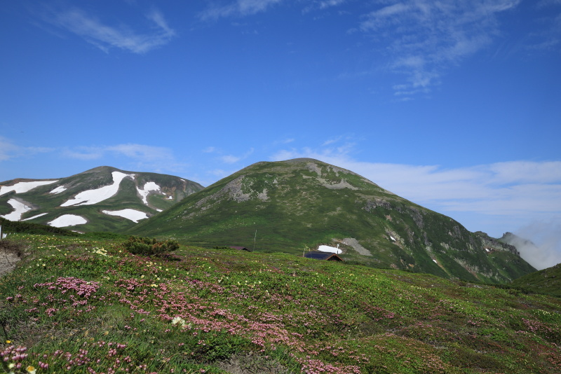7919 雪渓とツガザクラ
