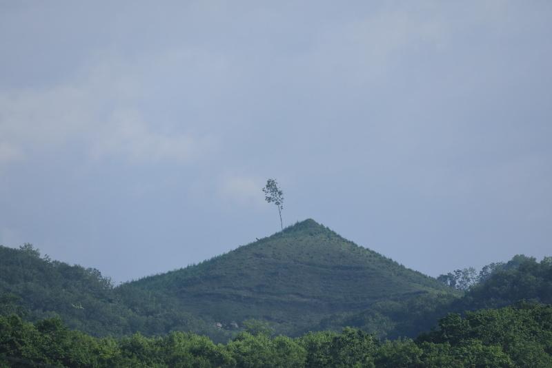 8301 一本の木