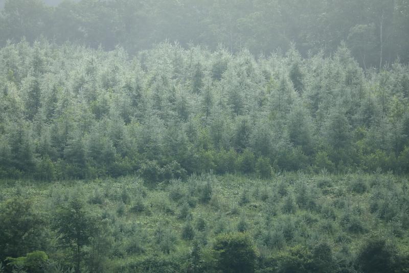 8304 キラッキラ松林