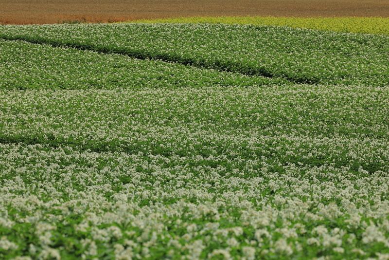 8496 小麦畑も入れて