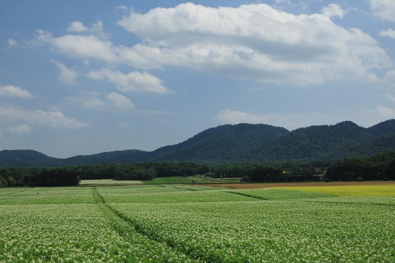8513 広大なジャガイモ畑と雲