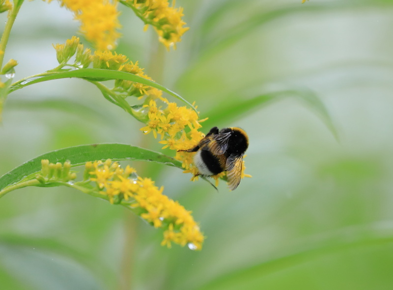 0076ハチと花