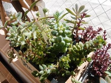 6-16植物1j