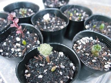 6-25多肉植物j