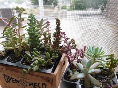 7-16多肉植物1j