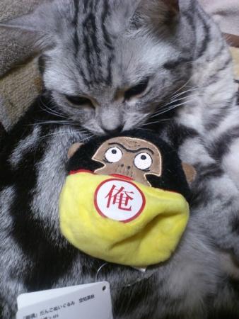 空知英秋 猫