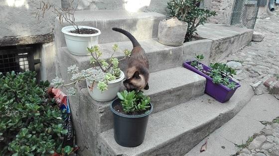 オー・ドゥ・カーニュの猫