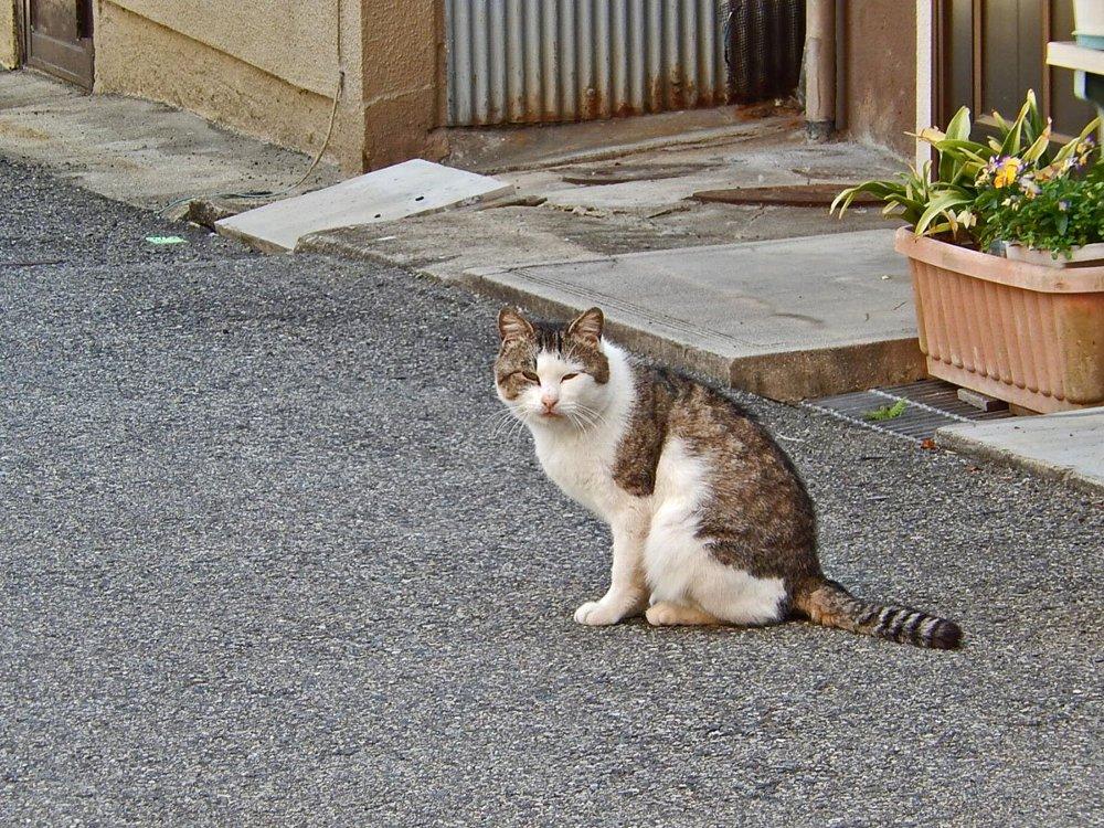むくむく猫