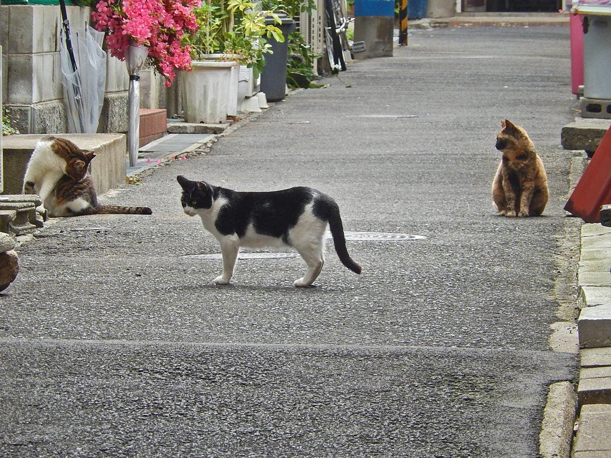 路上の猫たち