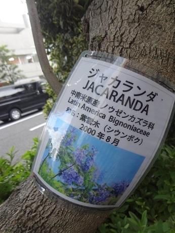 ジャカランダ3