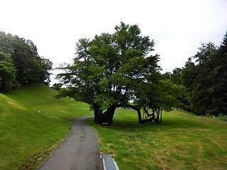 滝の中5番の木
